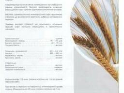 Семена ярового ячменя Виенна (Австрия)
