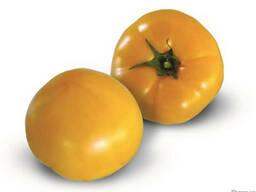 Семена желтого томата KS 10 F1 (Китано)