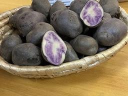 Семенной картофель Марфуша элита, отправляем почтой
