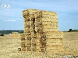 Сено луговое, солома пшеничная