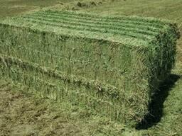 Сено зеленое в тюках по области с доставкой