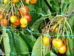 Сетка от птиц защитная на деревья, кустарники (4м*20м)