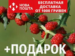 Шпинат земляничный семена (20 шт) шпинат малина, жминда. ..