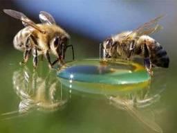 Сироп глюкозно-фруктозный (для подкорма пчел)