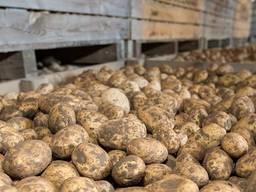 Сховище для довготривалого зберігання картоплі