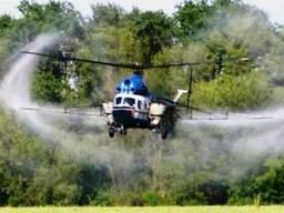 Послуги гелікоптера склеювання стручків ріпаку