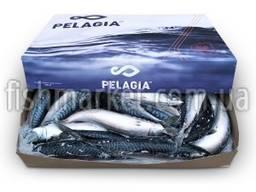 Скумбрия с/г с/м 400-600 Pelagia (GBR)