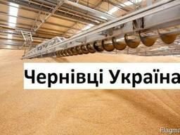 Куплю Пшеницу Черновцы Украина