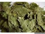 Смородина лист. Листья черной смородины. - фото 1