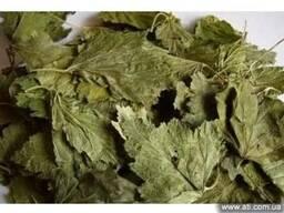 смородины лист сушеный