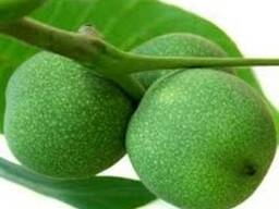 Сок зелёного грецкого ореха