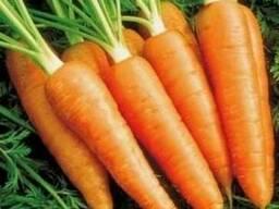 Сортовые семена морковки