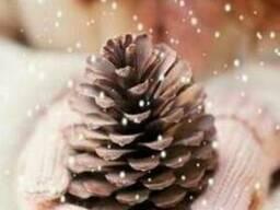 Сосновые и еловые шишки для новогоднего декора купить