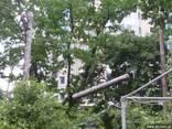Спил аварийных деревьев.