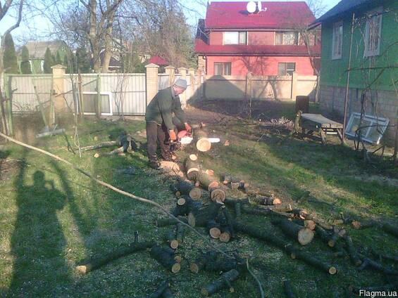 Спил дерева. Спиливание деревьев Киев
