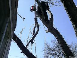 Спил деревьев - фото 2