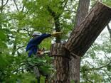 Спил деревьев - фото 1