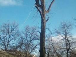 Спил деревьев Днепр - фото 2