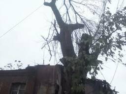 Спил деревьев Днепр - фото 4