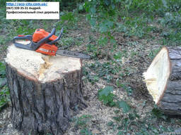 Спил деревьев Киев и обл. Резка, корчевание пней