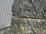 Спил деревьев Киев. Обрезка деревьев сада. Спилить дерево - фото 1