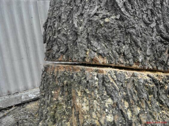 Спил деревьев Киев. Обрезка деревьев сада. Спилить дерево