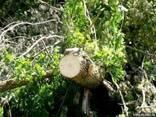 Спил деревьев киевская область