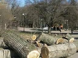 Спил деревьев любой сложности! Корчевка пней, вывоз мусора.