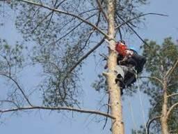 Спил деревьев любой сложновти