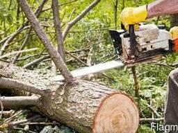 СПИЛ деревьев, Распил. Подсобники. Разнорабочие