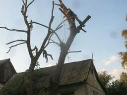 Спил деревьев в Днепре и пригороде .