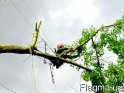 Спил деревьев в Днепропетровске и области