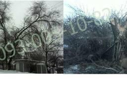 Спил деревьев Валка деревьев порезка дров