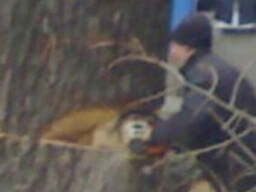 Спил и подрезка деревьев.
