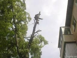 Спил проблемных деревьев :: обрезка сада.