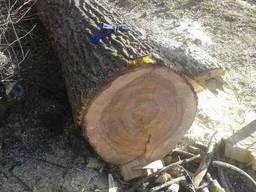 Спилим деревья, валка. Покос травы, Расчистка участка