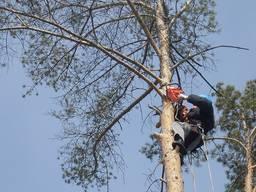 Спил, валка , обрезка деревьев
