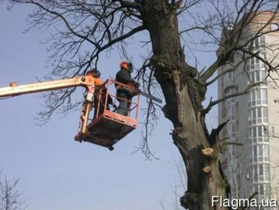 Спилим аварийные деревья, расчистка участков, утилизация вет