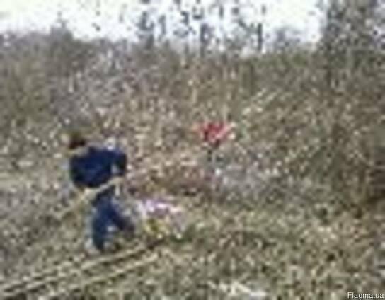 Спил деревьев Уборка участка Одесса Земляные работы