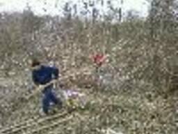 Спил деревьев Уборка участка Одесса Земляные работы - фото 1