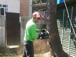 Спилить дерево. Спил деревьев. Обрезка аварийных деревьев.