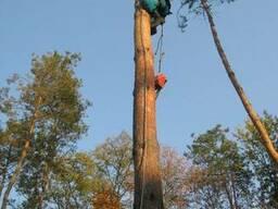 Спилить дерево Удалить дерево. Удаление - вырубка кустарника