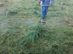 Покос травы. Косим траву. Уборка участко. выкорчуем деревья.