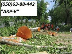 Спилить деревья,вывезти мусор.