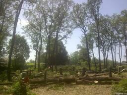 Спилить, удалить дерево Харьков