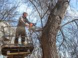 Спилить Удалить Обрезать Срубить Завалить Обрезать Клонировать Дерево - фото 1