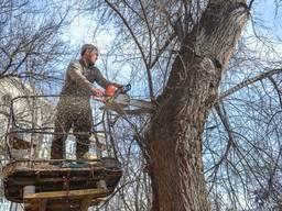 Спилить Удалить Обрезать Срубить Завалить Обрезать Клонировать Дерево