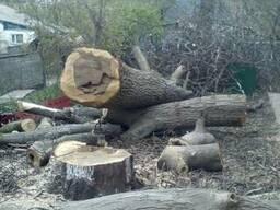 Спиливание деревьев Киев.