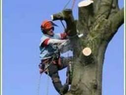 Уборка деревьев . Удаление корчевка пней
