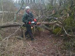 Спиливание деревьев Вышгород.
